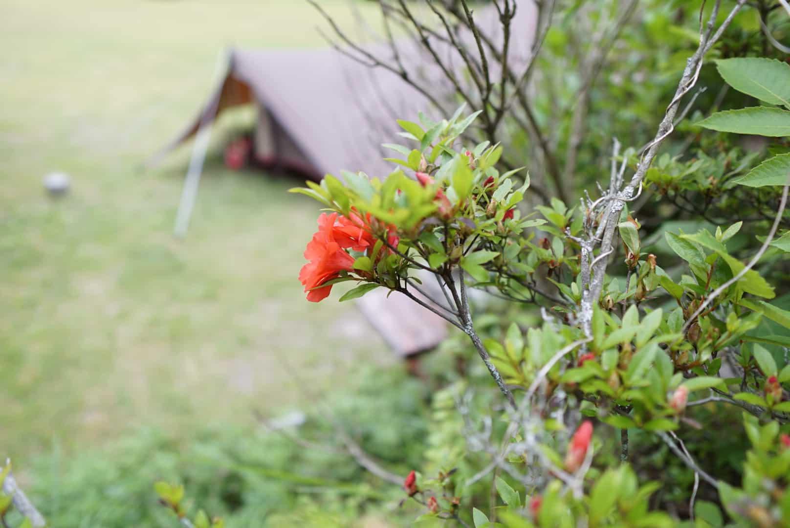 テントと花の画像